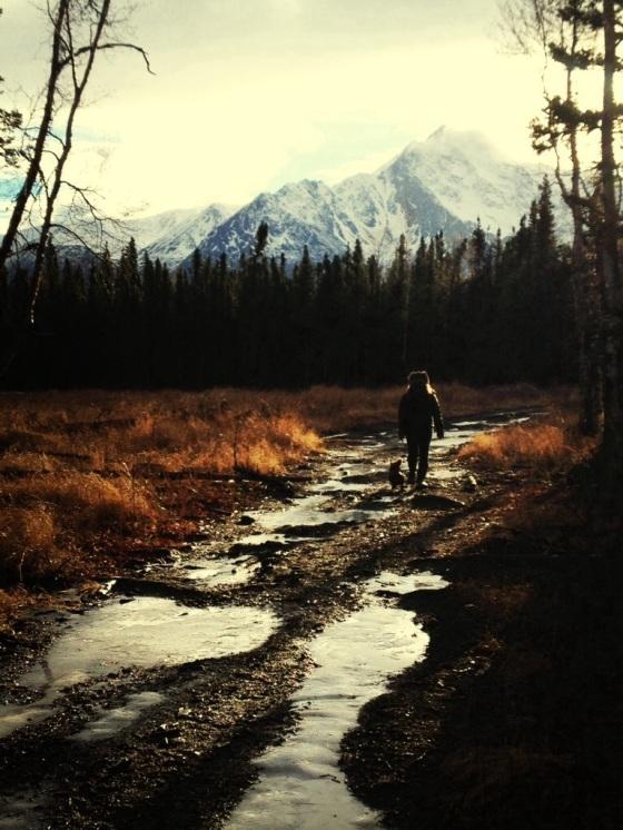 alaska woods.jpg