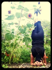 sunflower headstand